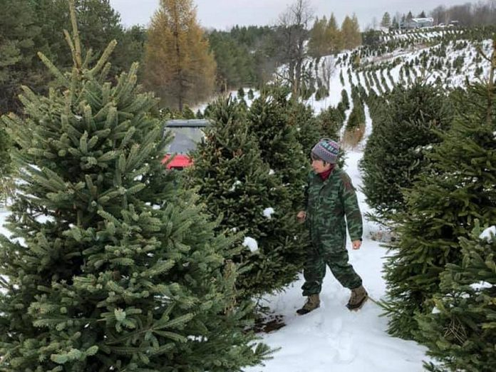 Open daily, Powell's Trees in Bowmanville offers Spruce and Fir. (Photo: Powell's Trees / Facebook)