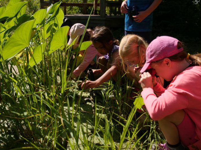 A group of campers study wetland habitat at the Earth Adventures summer camp at GreenUP Ecology Park. Education about our natural environment can empower us to protect our natural world. (Photo courtesy of GreenUP Ecology Park)