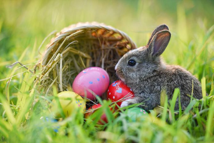 The Easter Bunny has been declared an essential worker in Ontario during the COVID-19 pandemic, but can't deliver treats in public spaces.
