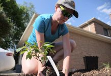 Wednesday, April 22, 2020 marks the 50th anniversary of Earth Day, and this week is also National Volunteer Week. In 2019, volunteers with Peterborough GreenUP's Sustainable Urban Neighbourhood program planted more than 1,200 square metres of gardens, including native species of plants that have a low-water need. (Photo: GreenUP)