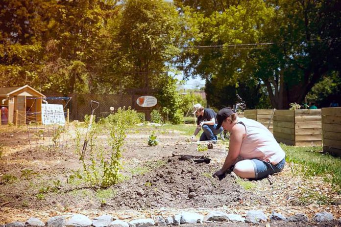 A community garden in the City of Peterborough. Public health units have released guidelines for the safe operation of community gardens, which include instructions such as maintaining physical distancing between gardeners. (Photo courtesy of Nourish Project)