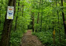 Trails in the Ganaraska Forest, along with the nine conservation areas managed by the Ganaraska Region Conservation Authority, will reopen for hiking on May 22, 2020. (Photo: Ganaraska Region Conservation Authority)