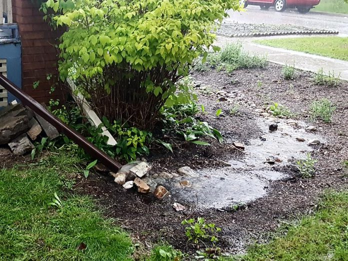 A rain garden in action. GreenUP will be offering online informational sessions and workshops to support the new Rain Garden Subsidy Program through the City of Peterborough.  (Photo courtesy of GreenUP)