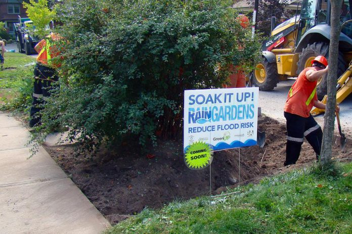 From 2016 to 2018, the GreenUP Ready for Rain Program installed eight demonstration rain gardens in the Avenues neighbourhood of Peterborough. Residents of the Avenues and volunteers planted these gardens, which have been growing and absorbing the rain ever since. A small rain garden can divert as much as 50,000 cubic metres from a single storm, and can also help to naturally filter and clean water and reduce flooding. (Photo courtesy of GreenUP)