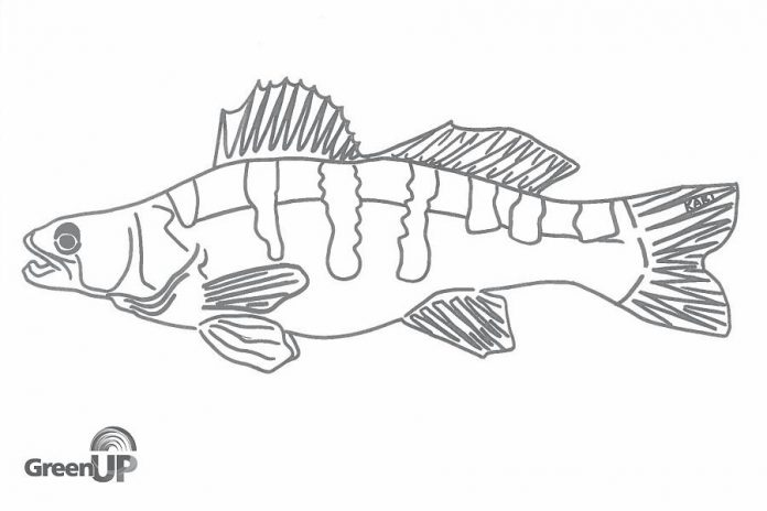 """Kari Jansen created original line-drawn colouring pages of local wildlife to accompany the three-part audiobook """"The Adventures of Jane and Grace"""" through the Jackson Creek Watershed in Peterborough, part of the Water Wednesday content available at the GreenUP website. (Photo courtesy of GreenUP)"""