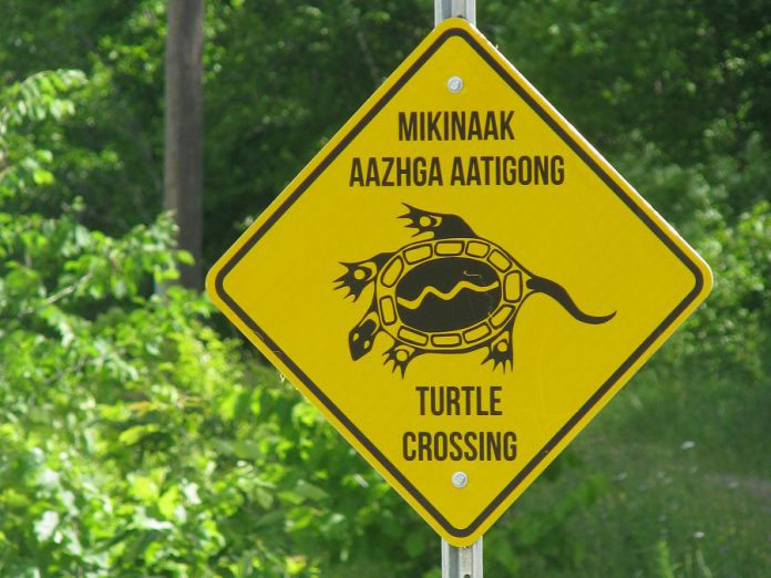 The new mikinaak (turtle) crossing signs at Curve Lake First Nation were translated by elders and installed as part of a project funded by Environment and Climate Change Canada, in partnership with Otonabee Conservation and Curve Lake First Nation. (Photo courtesy of Otonabee Conservation)