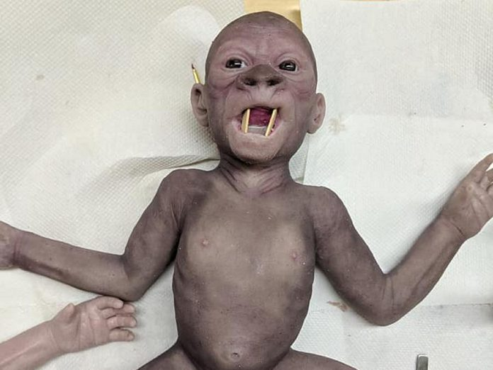 A nearly completed newborn gorilla. Omemee makeup FX artist Rhonda Causton painstakingly inserts individual hairs into the doll, which weighs the same as a real newborn ape. The completed creation costs $1,800 US. (Photo: Mandy Rose)