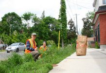 GreenUP staff help to maintain a boulevard rain garden in Peterborough. Surprisingly, many of the solutions to drought are also solutions for flood conditions. For example, a rain garden of drought-tolerant plants can survive periods of little rain, and it can also help absorb heavy rain, preventing water run-off from overwhelming the sewer infrastructure. (Photo courtesy of GreenUP)