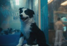 "How much is that doggie in the window? Nebula, one of the puppies from Karolina's Border Collies in Ennismore, in a scene from the second season two of Netflix's hit show ""The Umbrella Academy"". (Photo: Netflix)"