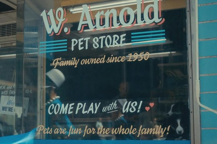"""A close-up of two of the puppies from Karolina's Border Collies in Ennismore in the pet store scene in """"The Swedish Job"""", the third episode of the second season. The scenes were shot on July 19, 2019 when The Umbrella Academy was being filmed in Toronto and Hamilton. (Photo: Netflix)"""