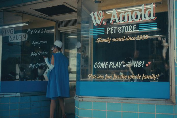 """Puppies from two litters bred by Karolina's Border Collies in Ennismore first appear in the pet store scene in """"The Swedish Job"""", the third episode of the second season, when The Handler (Kate Walsh) visits the store. The second season is set in Dallas, Texas, in the early 1960s.  (Photo: Netflix)"""