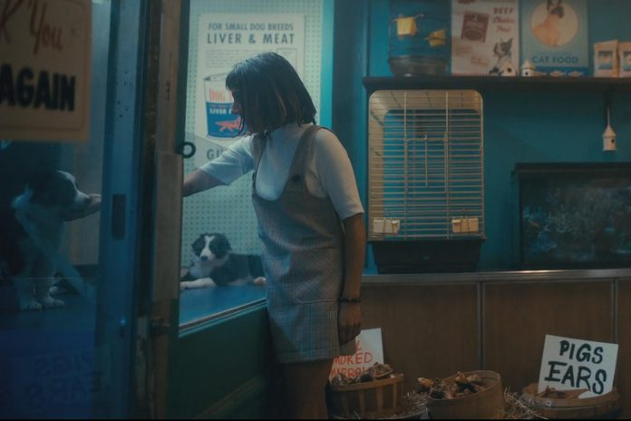 """The puppies from Karolina's Border Collies in Ennismore also appear again later in """"The Swedish Job"""", the third episode of the second season, when Lila Pitts (Ritu Arya) visits the same pet store and pets one of the pups. (Photo: Netflix)"""