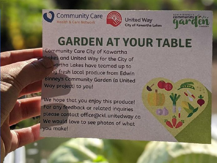 Through Garden at Your Table, a collaboration between  United Way CKL and Community Care City of Kawartha Lakes, produce from Edwin Binney's Community Garden has been delivered directly to 50 clients in Kawartha Lakes.  (Photo courtesy of United Way CKL)