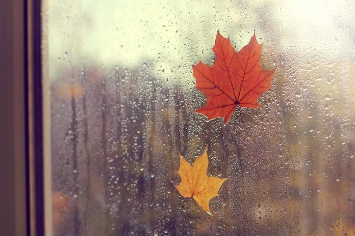 Two maple leaves stuck on a rain covered window during a fall storm. (Stock photo)