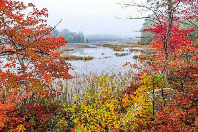This photo of fall on Kasshabog Lake in Peterborough County is one of a series by Mike Quigg that was our top post on Instagram in September 2020. (Photo: Mike Quigg @_evidence_ / Instagram)
