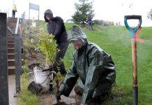 Paul Finigan (front) and Pat Kramer (back) from Otonabee Conservation plant native shrubs at Peterborough Regional Health Centre on October 21, 2020. The tree planting, which honours the hospital's front-line healthcare workers, is one of six tree plantings with five community partners that Otonabee Conservation is hosting over the fall. In all, Otonabee Conservation will be planting 5,690 trees. (Photo courtesy of Otonabee Conservation)