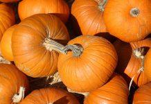 Pumpkins. (Stock photo)