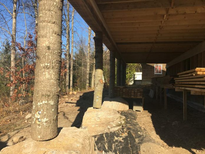 An example of the use of repurposed natural materials incorporated into the new health centre building under construction at Camp Kawartha can be found in the building support beams: pine tree trunks with huge boulders as their footings. (Photo: Paul Rellinger / kawarthaNOW.com)