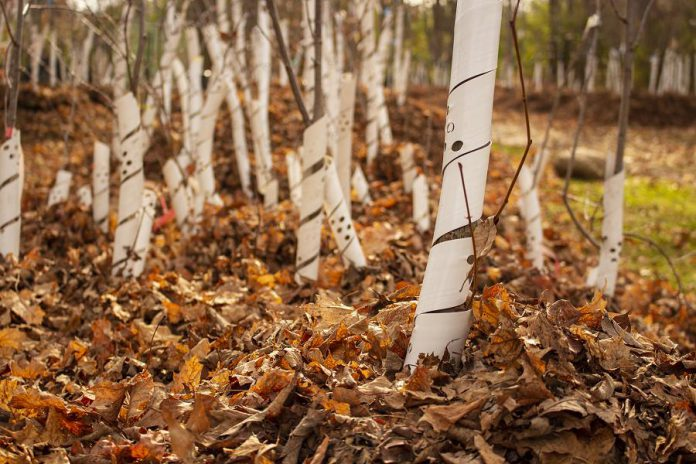 """Late fall is a great time of year to enjoy getting cozy in your space and in nature. GreenUP's Vern and Beige have been busy """"tucking in"""" all the trees at the Ecology Park Nursery with a cozy blanket of fall leaves. (Photo: Leif Einarson)"""