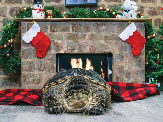 The 2021 Turtle Guardians calendar includes fun-filled turtle photos and educational quotes, with all proceeds from the sale of the calendar supporting the protection and care of Ontario's turtles. (Photo: Turtle Guardians / The Land Betweeen)