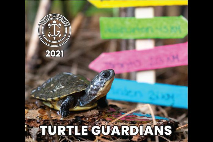 Designed by Jaime Kearnan, the 2021 Turtle Guardians calendar is available for an early bird price of $15. (Photo: Turtle Guardians / The Land Between)