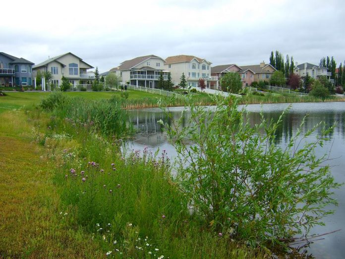 Property values are enhanced for homes backing onto suburban wetlands like these. Wetlands add natural heritage, flood prevention, and recreational value to neighbourhoods. (Photo: Rebecca Rooney)