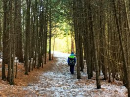 There are lots of options to enjoy nature in the Peterborough area this winter, including several hidden gems including Robert Johnston Eco Forest. Owned and maintained by Douro-Dummer Township, Robert Johnston Eco Forest offers several lovely forested trails and a stunning view over rolling hills. (Photo: Leif Einarson)