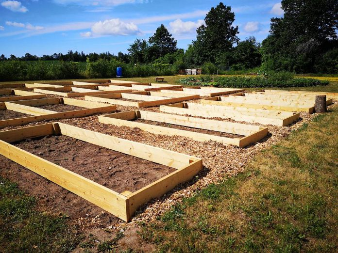 Raised gardens under construction in July 2020 at Sheet Seven Community Garden, located behind the Peterborough Curling Club at 2195 Lansdowne Street West. Sheet Seven is now accepting applications for leasing allotment plots at the community garden for the 2021 growing season. (Photo courtesy of Pauline Orpwood / Peterborough Curling Club)