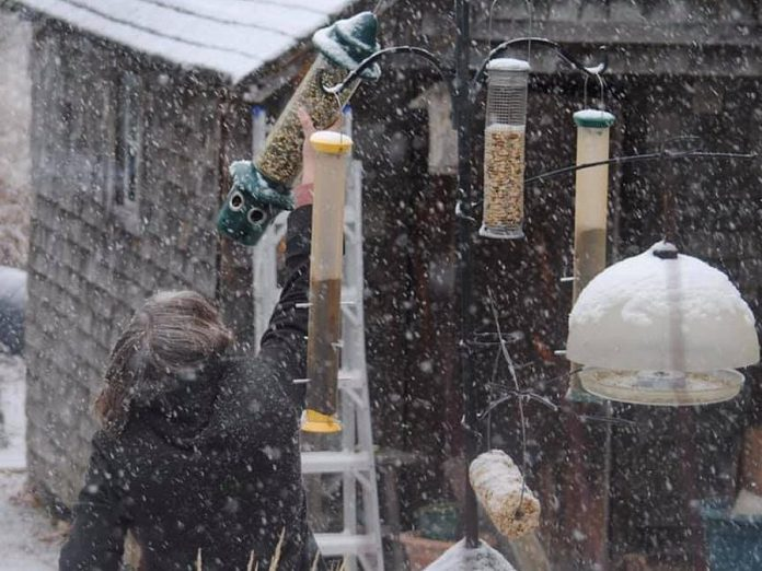 Birdwatching has surged in popularity during the pandemic, keeping Avant-Garden Shop owner Brenda Ibey busy filling orders for birdseed and backyard birding supplies including feeders. (Photo courtesy of The Avant-Garden Shop)