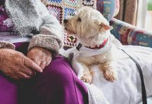 "ElderDog Canada is a national charity dedicated to ageing people, ageing dogs, and the human-animal bond. The organization is planning to launch a local chapter (""Pawd"") in Peterborough this summer. (Stock photo)"