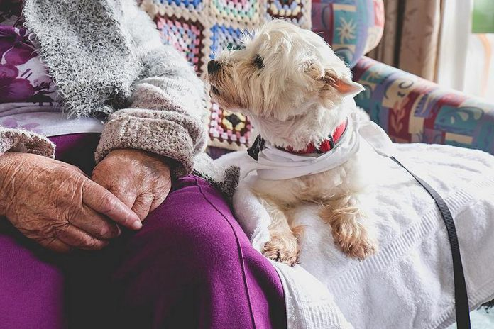 """ElderDog Canada is a national charity dedicated to ageing people, ageing dogs, and the human-animal bond. The organization is planning to launch a local chapter (""""Pawd"""") in Peterborough this summer. (Stock photo)"""