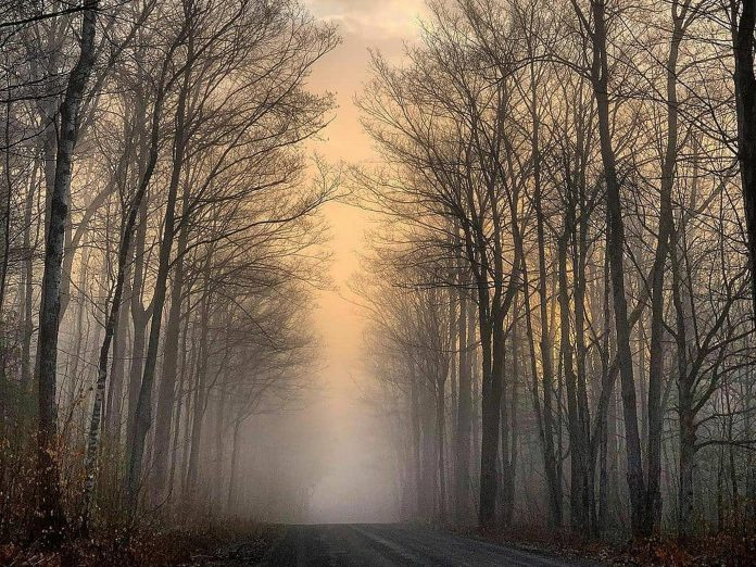This photo of a misty country backroad in Selwyn Township by Memtyme was our top Instagram post in April 2021 with more than 13,600 impressions. (Photo: Memtyme @memtyme / Instagram)