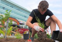 GreenUP's executive director Brianna Salmon plants a native grass at Jiimaan'ndewemgadnong Pocket Park, located at the corner of King and Water Streets in downtown Peterborough. Native plants are an ideal choice for a low-maintenance garden, as their root systems can accommodate both drought and heavy rainfall. (Photo: GreenUP)