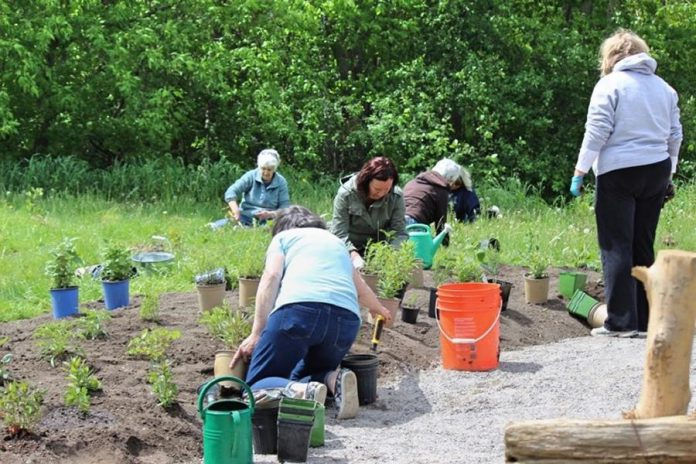 While the pollinator garden project was funded through a grant from the federal government's New Horizons for Seniors Program, it wouldn't have been possible without the efforts of many volunteers from the Reaboro community. (Photo: Elayne Windsor)