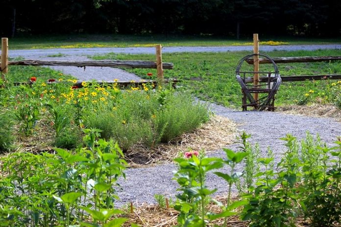 A section of the pollinator garden at Reaboro Park in June 2021. The garden includes native flowers such as wild bergamot, black-eyes Susan, blue indigo, native sunflowers, and many more. Native shrubs are also planted behind the garden. (Photo: Elayne Windsor)