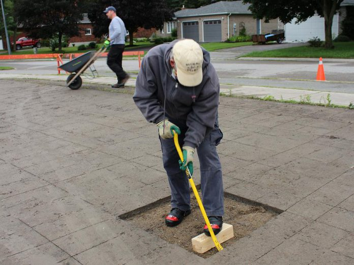 Volunteer Bill Stewart begins removing asphalt during the Depave Paradise project in Lakefield. Stewart's family once owned the farm that preceded the construction of Winfield Shores on this site. (Photo: Genevieve Ramage)