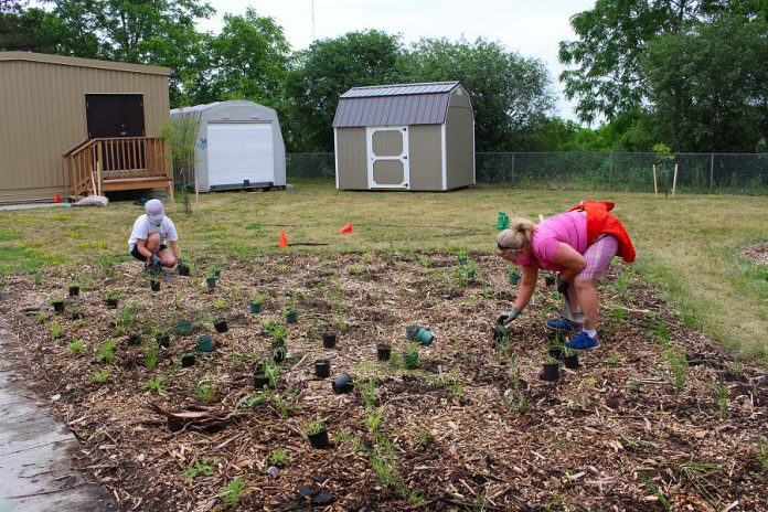 Volunteers plant the calming prairie area of the new therapy garden at Five Counties Children's Centre. (Photo: Genevieve Ramage)