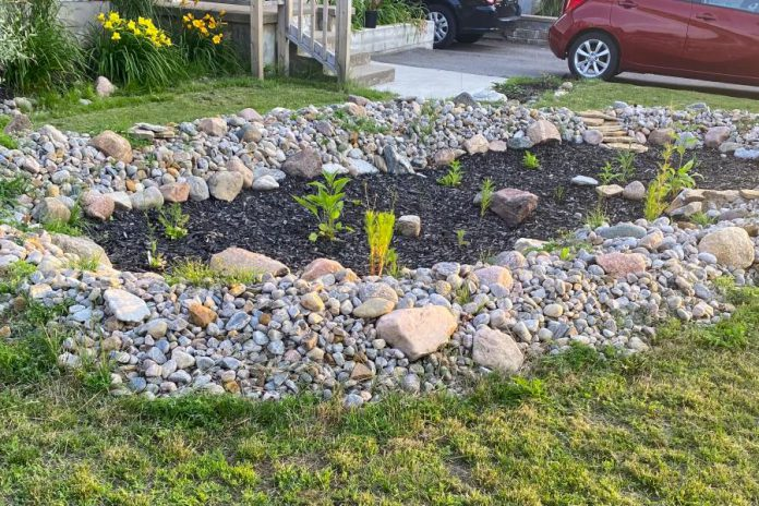 A rain garden designed and installed by a Peterborough resident as part of the City of Peterborough's 2020 Rain Garden Subsidy Program. (Photo: Kat Tepylo-Murphy)