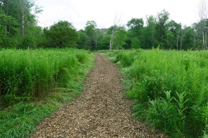 The proposed trails network would run through forests, wetlands, and fields, all of which would be protected from development by Kawartha Land Trust. (Photo courtesy of Kawartha Land Trust)