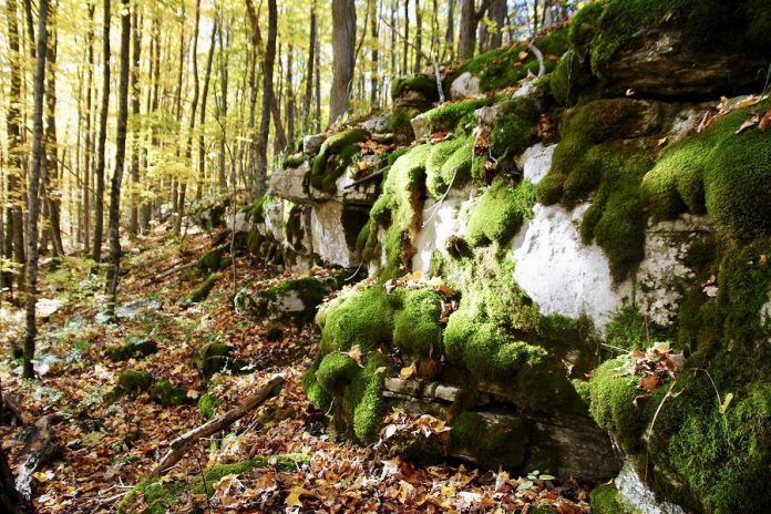 The proposed trail route runs through The Land Between, an area of transition between the ecosystems of the Canadian Shield and the St. Lawrence Lowlands. It contains elements from the ecosystems it borders, including the ancient rock of the Canadian Shield and the fertile wetlands of the St. Lawrence Lowlands. (Photo courtesy of Kawartha Land Trust)