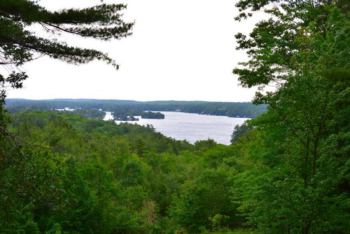 A view of Stony Lake from the Jeffrey-Cowan Forest Preserve. one of the 22 properties protected by the Kawartha Land Trust. The proposed trail network provides a way to connect protected properties and maintain a natural corridor of undeveloped land that's important for species migration, especially during climate change.  (Photo courtesy of Kawartha Land Trust)