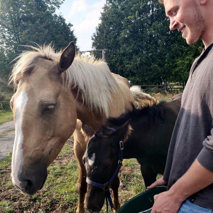 Calypso and her 10-week-old foal are safe and sound and will be reunited with their owner. (Photo: Carol Edwards / Facebook)