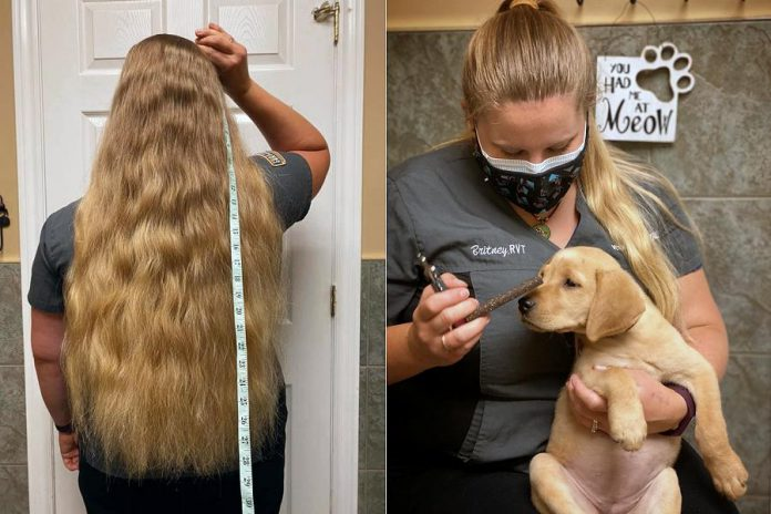 In addition to raising funds for brain tumour research, Britney Krzeminsk, will be donating her cut hair to a Toronto non-profit organization that makes wigs for those who have lost their hair due to illness. Omemee Veterinary Hospital, where Britney works, is supporting her cause by donating proceeds from its $10 cash 'fear free' nail trims in September to the Brain Tumour Foundation of Canada. (Photos courtesy of Britney Krzeminsk and Omemee Veterinary Hospital)